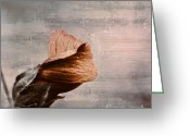 Texture Flower Photo Greeting Cards - Deploiement - 05ft01b Greeting Card by Variance Collections