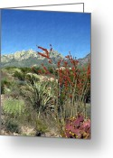 New Mexico Greeting Cards - Desert Bloom Greeting Card by Kurt Van Wagner
