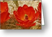 Cactus Flower Digital Art Greeting Cards - Desert Blooms Greeting Card by Ben and Raisa Gertsberg