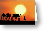 Four Animals Greeting Cards - Desert Camel Rides Greeting Card by Amateur photographer, still learning...