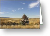 Prairie Landscape Greeting Cards - Desert Christmas Greeting Card by Dusty Demerson