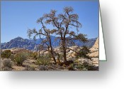 Tans Greeting Cards - Desert Contrast Greeting Card by Kelley King
