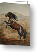 Color Pencils Greeting Cards - Desert horse Greeting Card by Melita Safran