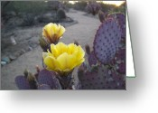 Lisa Bentley Greeting Cards - Desert Path 01 Greeting Card by Lisa Bentley