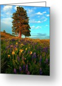 Balsamroot Greeting Cards - Desert Pines Meadow Greeting Card by Mike  Dawson