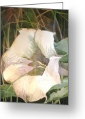 Thorn Apple Greeting Cards - Desert Thorn Apple Greeting Card by Gurukirn Khalsa
