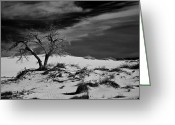 Kaiser Greeting Cards - desert tree in White Sands bw Greeting Card by Ralf Kaiser