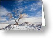 Kaiser Greeting Cards - Desert Tree In White Sands Greeting Card by Ralf Kaiser