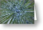 Yucca Plant Greeting Cards - Detail Of A Yucca Plant In The Needles Greeting Card by Scott S. Warren