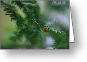 Chromatic Greeting Cards - Detail Of Yew Bough With One Red Berry Greeting Card by Mattias Klum