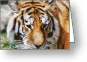 Safari Greeting Cards - Detroit Tiger Greeting Card by Michelle Calkins