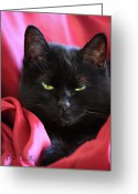 Black Cat Greeting Cards - Devil In A Red Dress Greeting Card by Bob Orsillo