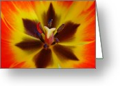 Tulip Greeting Cards - Devil Inside Greeting Card by Juergen Roth