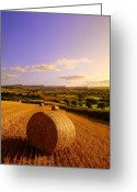 Restful Greeting Cards - Devon Haybales Greeting Card by Neil Buchan-Grant