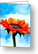 Flower Photograph Greeting Cards - Devotion Greeting Card by Gwyn Newcombe