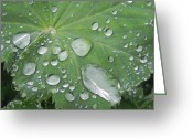 Adrienne Petterson Greeting Cards - Dew Drops Greeting Card by Adrienne Petterson