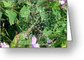 Web Digital Art Greeting Cards - Dew On The Web Greeting Card by Methune Hively