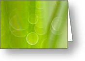Green Photo Greeting Cards - Dewdrops Greeting Card by Silke Magino