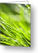 Growing Water Greeting Cards - Dewy green grass  Greeting Card by Elena Elisseeva