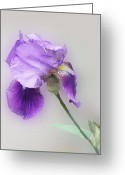 Flower Blossom Greeting Cards - Diagonal Purple Iris 1 Greeting Card by Linda Phelps