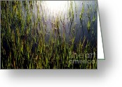 Reeds Reflections Greeting Cards - DIAMONDS in the MARSH Greeting Card by Karen Wiles