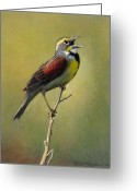 Prairie Greeting Cards - Dickcissel Summer Song Greeting Card by Bruce Morrison