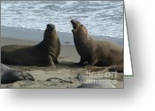 San Simeon Greeting Cards - Difference Of Opinion Greeting Card by Methune Hively