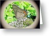 Pudica Greeting Cards - Digital Gray Hairstreak Butterfly - Strymon melinus pudica Greeting Card by Carol Senske