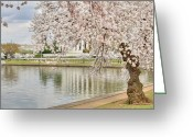 Blossom Digital Art Greeting Cards - Digital Liquid - Cherry Blossoms Washington DC 6 Greeting Card by Metro DC Photography