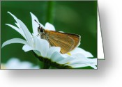 Dion Skipper Greeting Cards - Dion Skipper in square Greeting Card by Michael Peychich