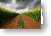 Devon Greeting Cards - Dirt Track through red soil in a Rapeseed flower field Greeting Card by Mark Stokes