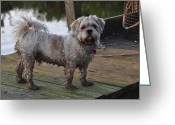 Dirty Dog Greeting Cards - Dirty dog after swimming in the Pond Greeting Card by Diane Allen