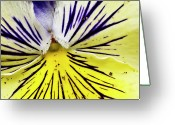 Connecticut Greeting Cards - Dirty Pansy Greeting Card by Jennifer Smith