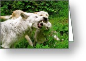 Nature And Wolves Greeting Cards - Discipline The Young Greeting Card by Debra     Vatalaro