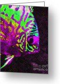 Marine Animals Greeting Cards - Discus Tropical Fish 2 Greeting Card by Wingsdomain Art and Photography