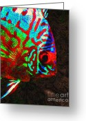Saltwater Fish Greeting Cards - Discus Tropical Fish Greeting Card by Wingsdomain Art and Photography