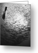 Large Group Greeting Cards - Diver And A Large School Of Bigeye Greeting Card by Steve Jones