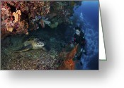 Sea Turtles Greeting Cards - Diver And Sea Turtle, Manado, North Greeting Card by Mathieu Meur