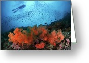 Large Group Of Animals Greeting Cards - Diver And Soft Corals In Pescador Island Greeting Card by Nature, underwater and art photos. www.Narchuk.com