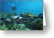 Humans Greeting Cards - Diver Watching Blue Tangs, Doctorfish Greeting Card by George Grall