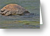 Oval Greeting Cards - Diving Turtle Rock - Flathead River Middle Fork MT Greeting Card by Christine Till