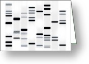 Canvas Greeting Cards - DNA Art Black on White Greeting Card by Michael Tompsett