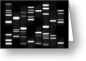 Canvas Greeting Cards - DNA Art White on Black Greeting Card by Michael Tompsett
