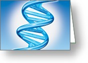 Dna Greeting Cards - DNA Double Helix Greeting Card by Marc Phares and Photo Researchers