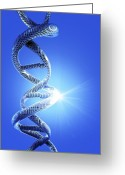 Helical Greeting Cards - Dna Helical Structure, Artwork Greeting Card by Victor Habbick Visions