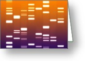 Molecule Greeting Cards - DNA purple orange Greeting Card by Michael Tompsett