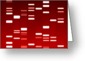 Biology Greeting Cards - DNA red Greeting Card by Michael Tompsett