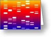 Biology Greeting Cards - DNA sunset Greeting Card by Michael Tompsett