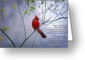Red Bird Greeting Cards - Do not worry . . .  Greeting Card by Bonnie Barry