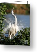 Courting Greeting Cards - Do you See Me Now Greeting Card by Sabrina L Ryan